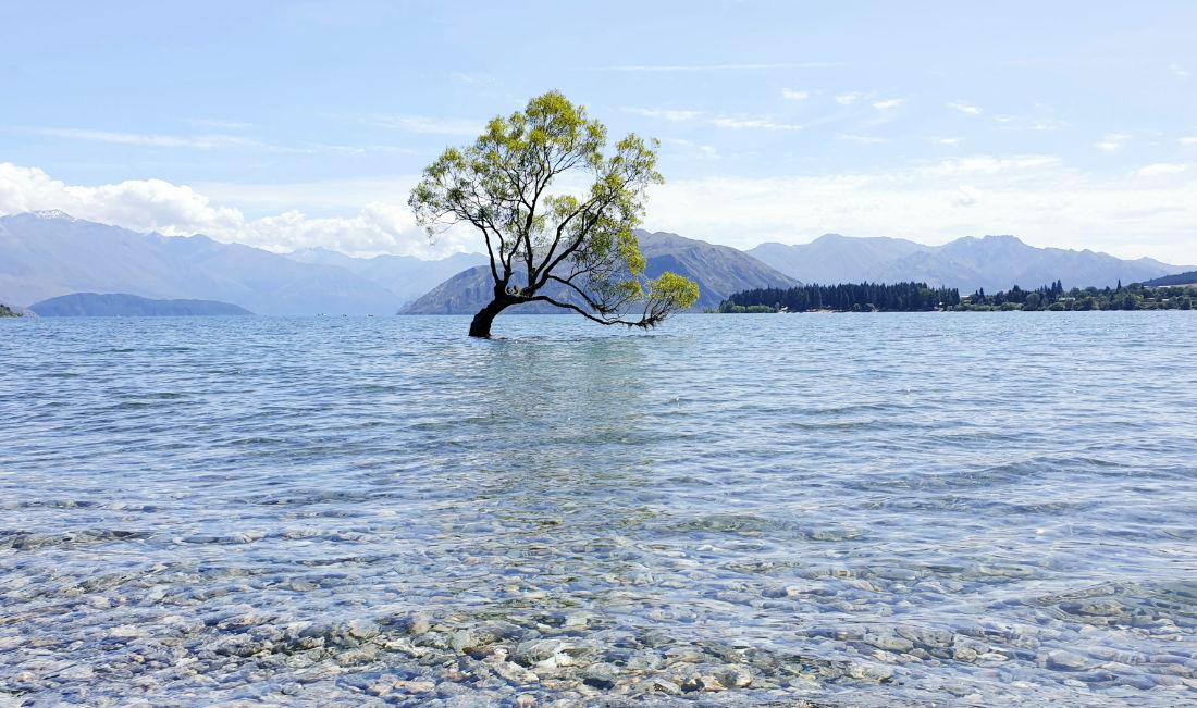 Baum im See vor Bergen